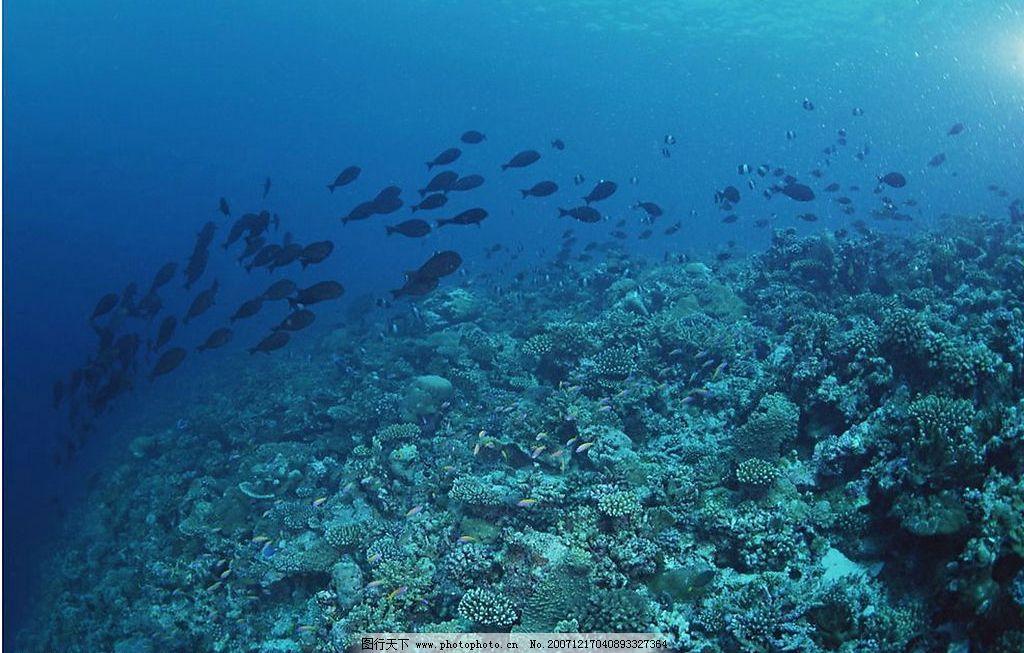 海底世界 珊瑚礁 热带鱼 海 其他 图片素材 摄影图库 200 jpg