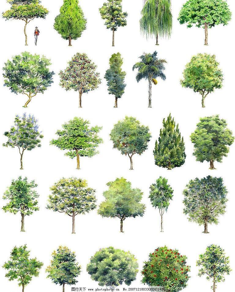 手绘园林用树-立面三图片