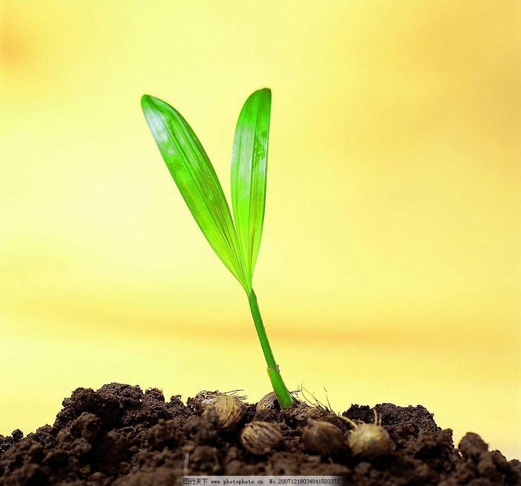 生命力量 生命 小草 发芽 萌芽 自然景观 自然风景 摄影图库 72 jpg