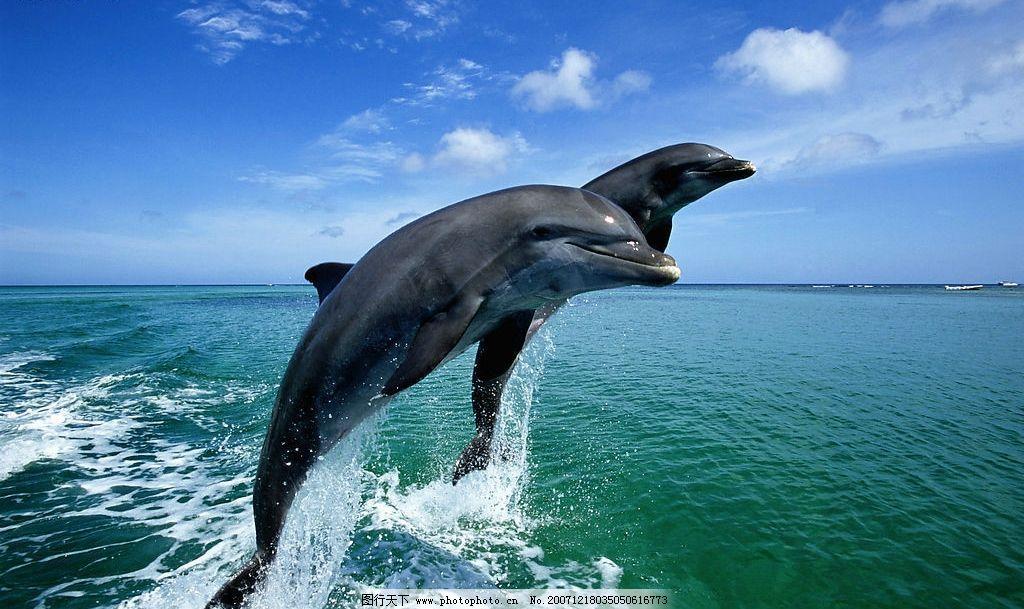海豚.天空 生物世界 野生动物 动物 摄影图库 300 jpg