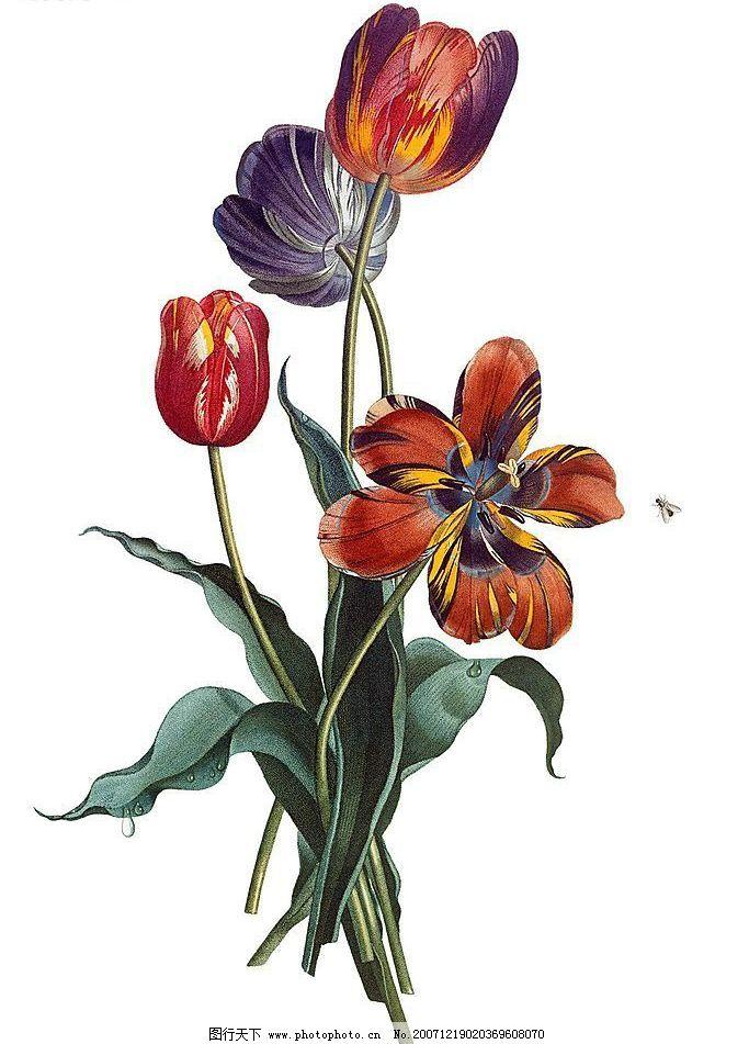 手绘-花之飨宴图片