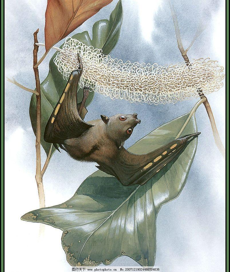 野生动物 生物世界 灭绝动物