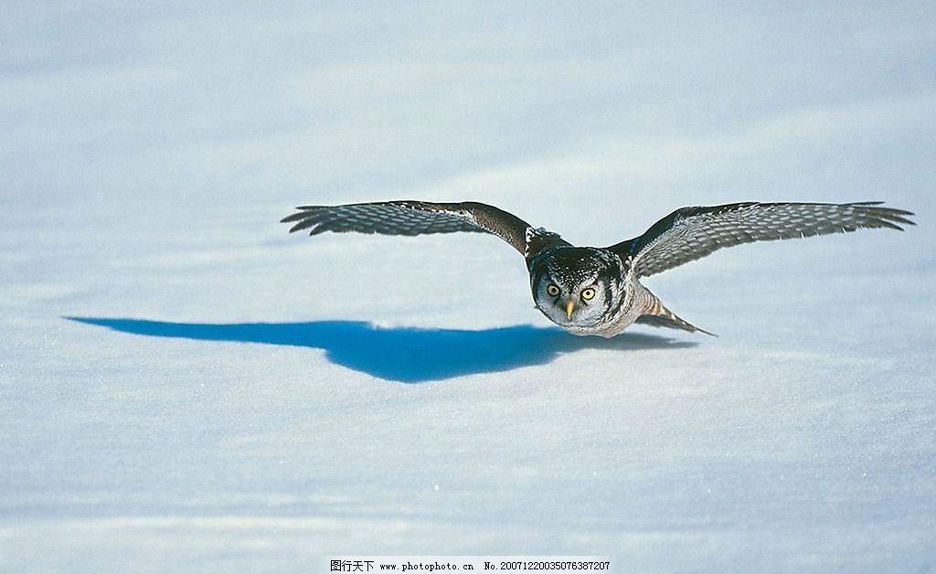 动物 飞行物jpg素材 生物世界 野生动物 摄影图库 150dpi jpg