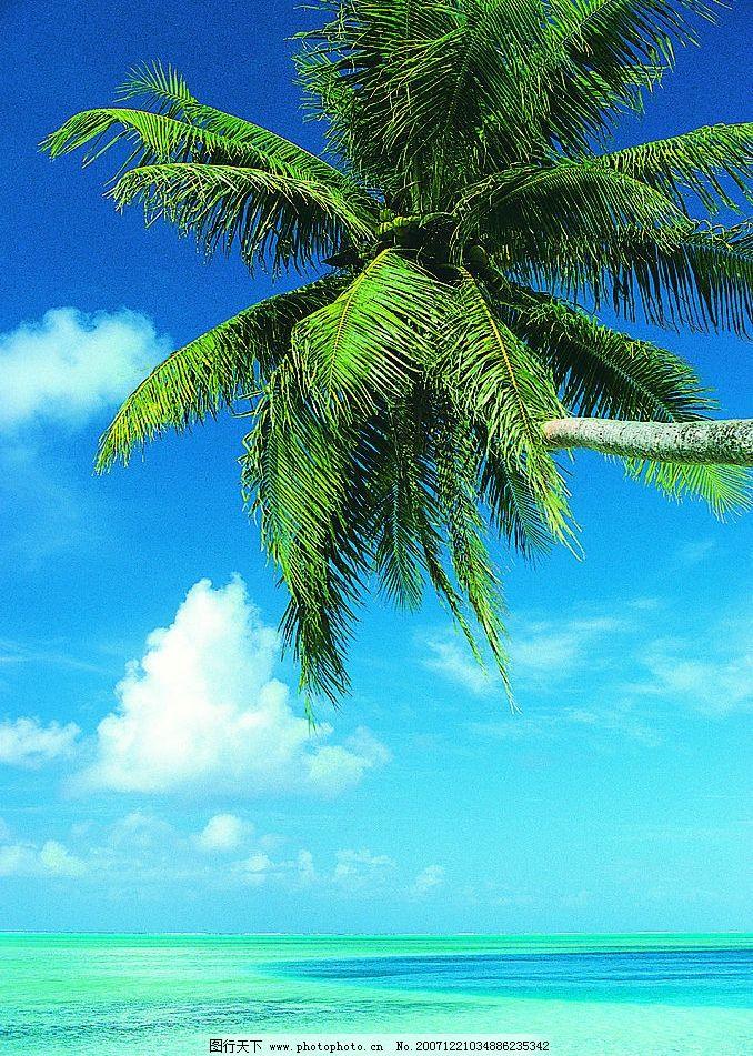 椰树 椰树,大海,蓝天,美图