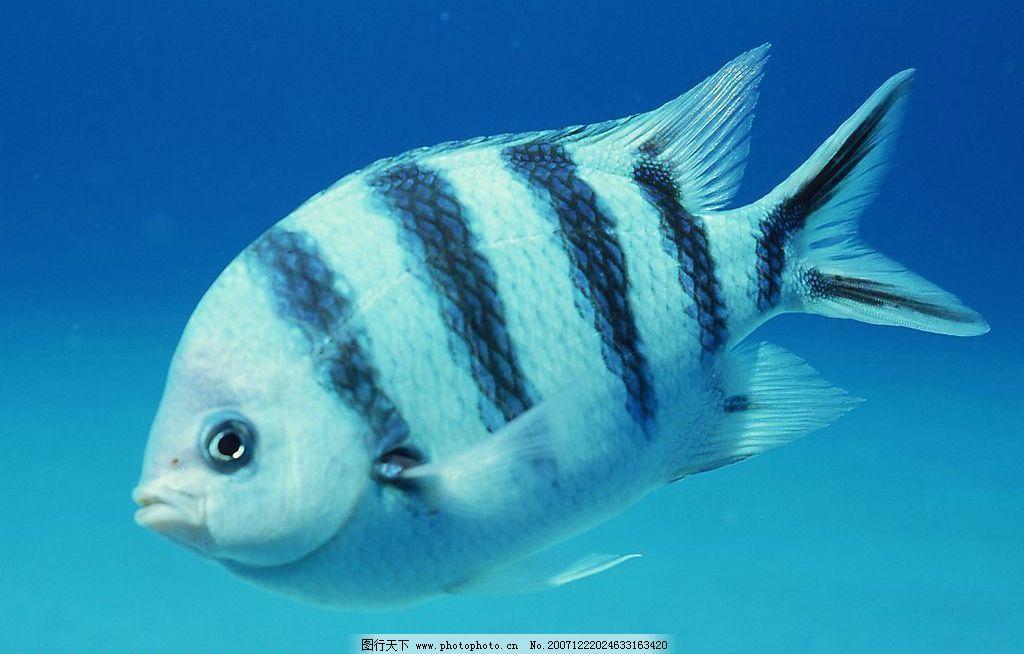 海洋鱼类图片图片
