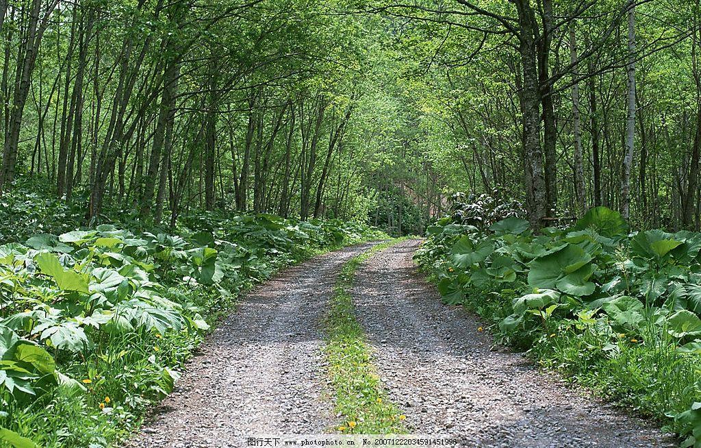 树林小路图片