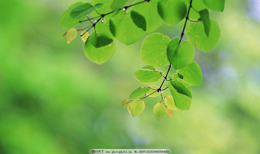 四季剪影 自然景观 其他 四季风景 摄影图库