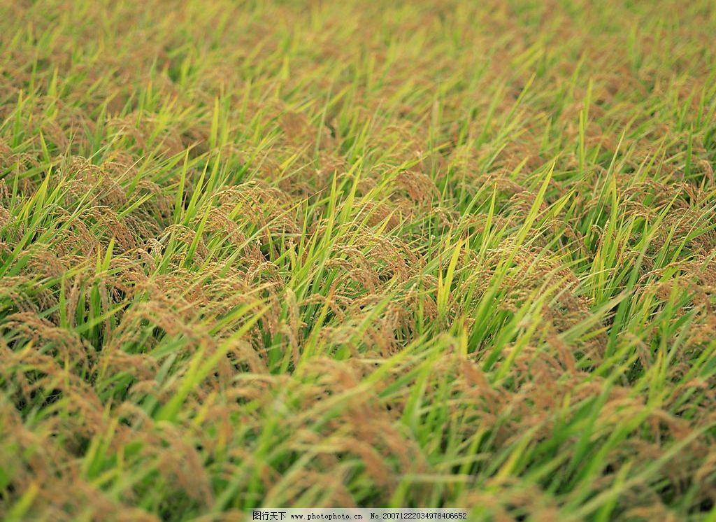 四季剪影 自然景观 其他 四季风景 摄影图库 350 jpg