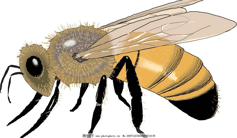 蜜蜂 矢量图 生物世界 昆虫 矢量图库   eps
