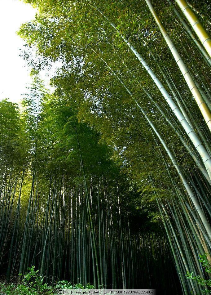 山水竹林风景美女图片