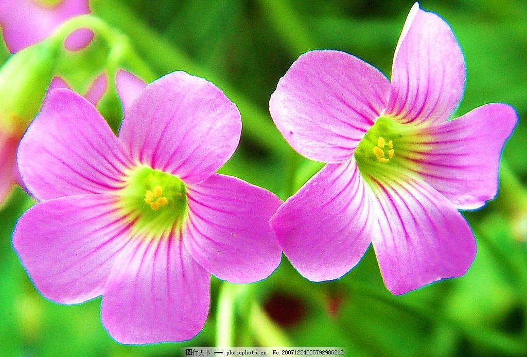 双花齐放 自然景观 其他 风景摄影图片 摄影图库