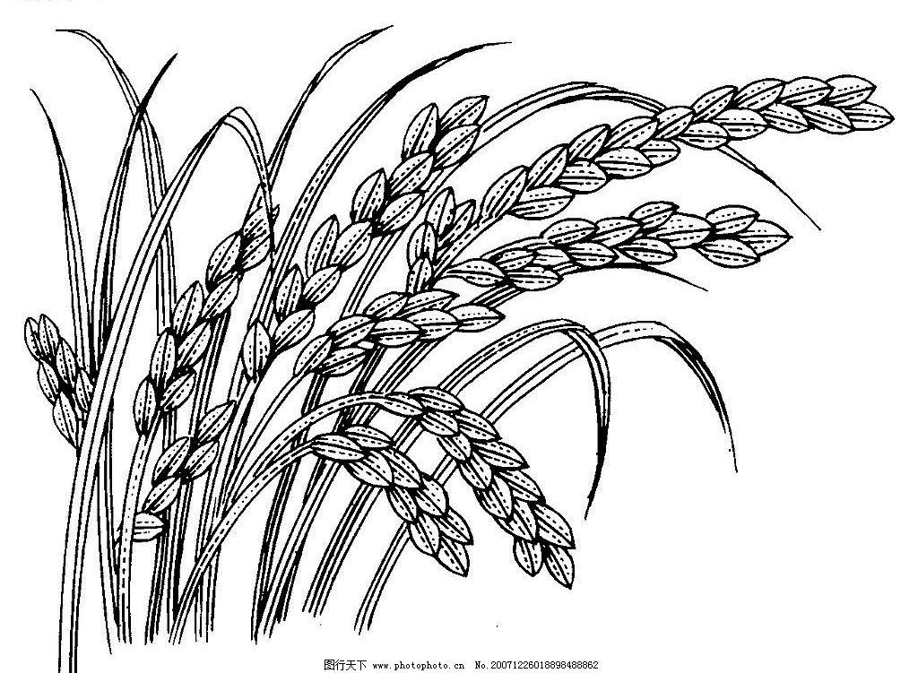 水稻黑白矢量图