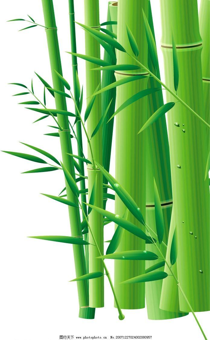 竹子的画法笔画步骤