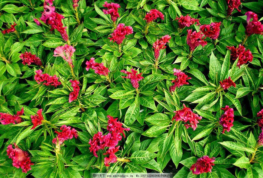红花绿叶 风景图片 自然景观