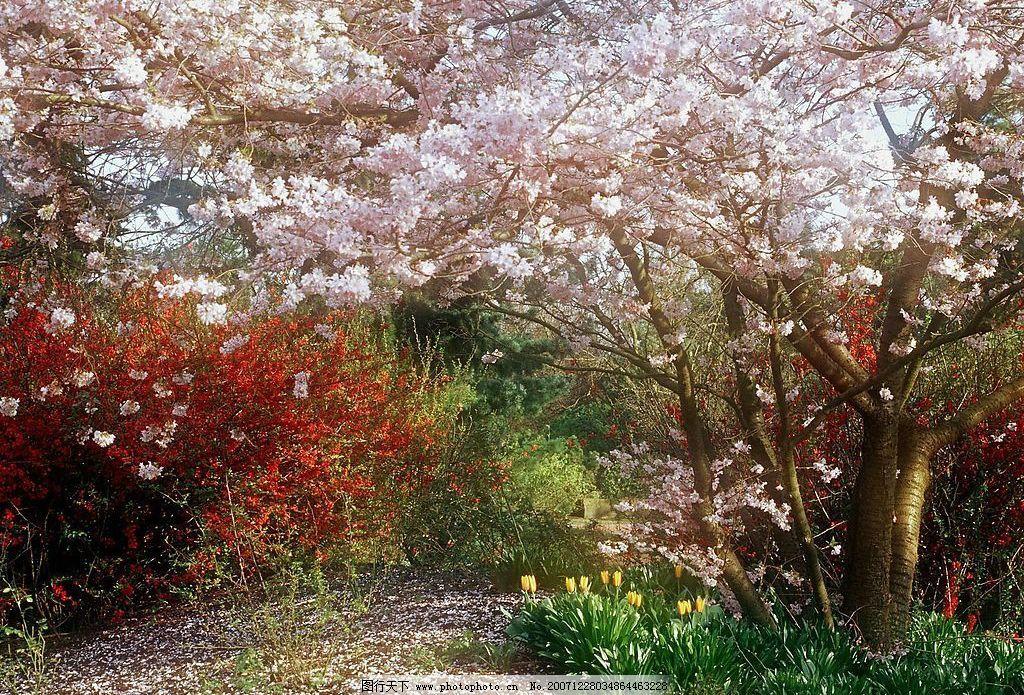 春天 花的绽放 生命力 自然景观 自然风景 风景 摄影图库 72 jpg