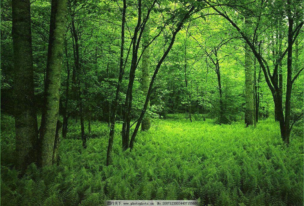 山林美景图片