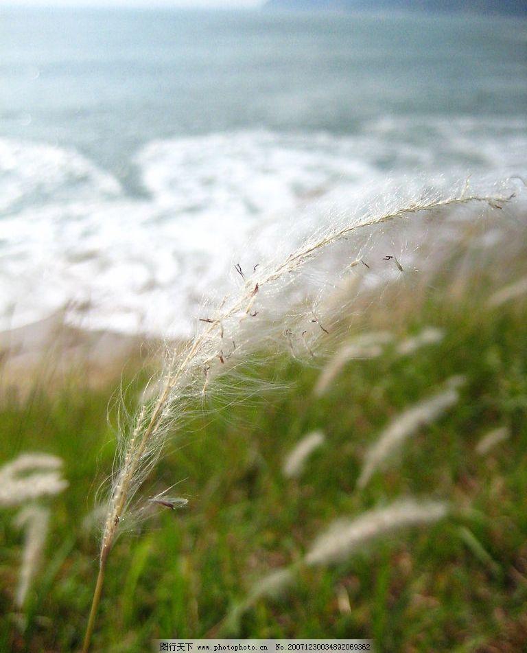 海岸 海洋 草 摄影图库